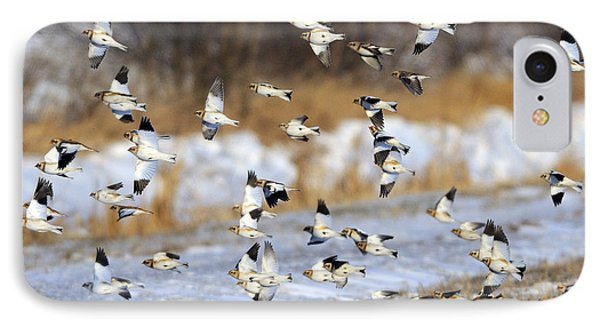 Snow Buntings IPhone Case by Tony Beck