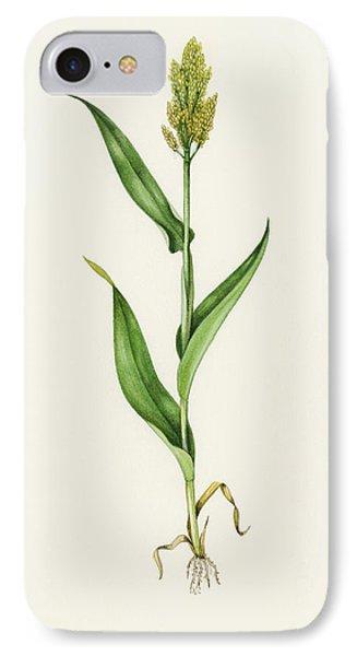 Sorghum (sorghum Bicolor), Artwork Phone Case by Lizzie Harper