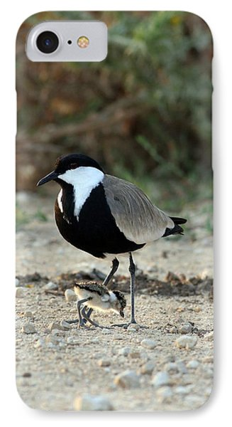 Spur-winged Plover And Chick IPhone 7 Case by Photostock-israel