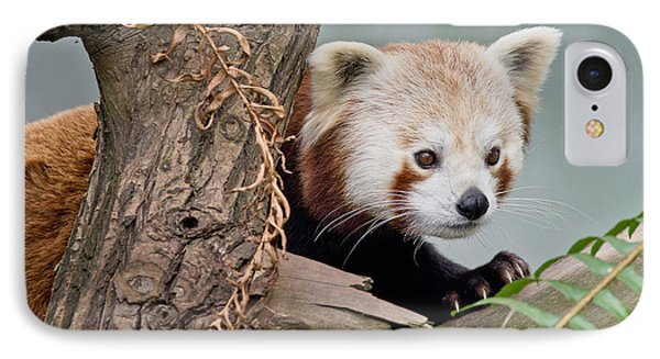 Stealthy Red Panda Phone Case by Greg Nyquist