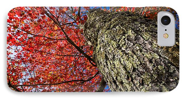 Sugar Maple Phone Case by Robert Clifford