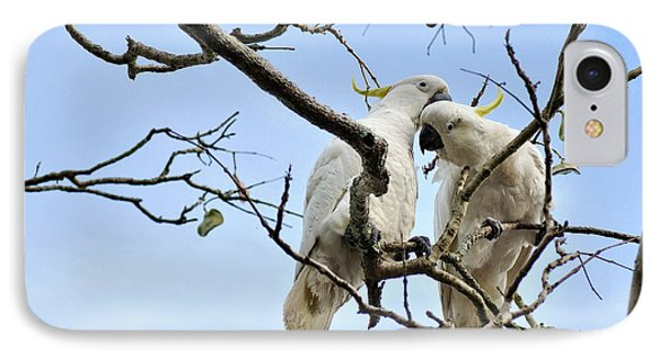 Sulphur Crested Cockatoos IPhone 7 Case by Kaye Menner