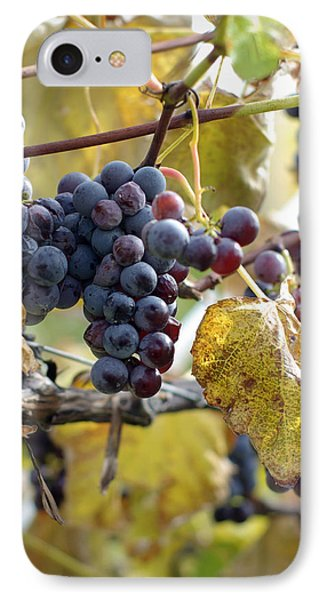 The Vineyard Phone Case by Linda Mishler