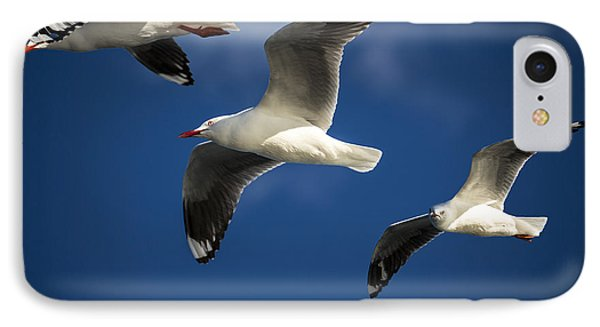 Three Silver Gulls Phone Case by Avalon Fine Art Photography