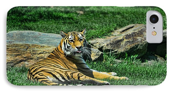 Tiger - Endangered - Lying Down - Tongue Out IPhone Case by Paul Ward