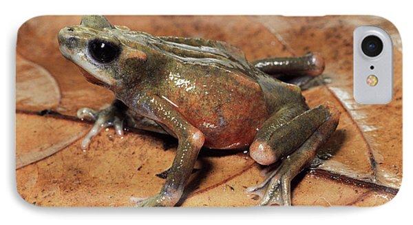 Toad Atelopus Senex On A Leaf Phone Case by Michael & Patricia Fogden
