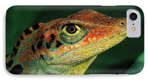 Transverse Anole Anolis Transversalis Phone Case by Murray Cooper