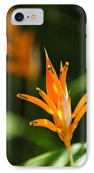 Tropical Orange Heliconia Flower IPhone Case by Elena Elisseeva