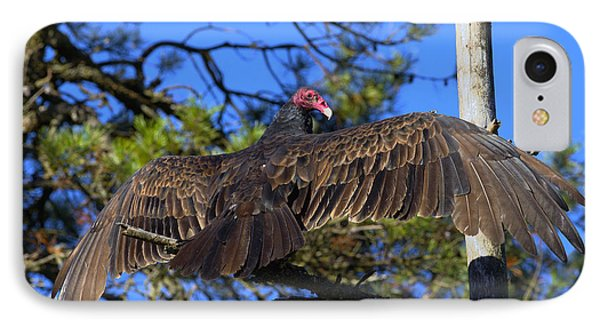 Turkey Vulture With Wings Spread IPhone 7 Case by Sharon Talson