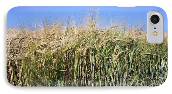 Wheat Field (triticum Sp.) Phone Case by Victor De Schwanberg