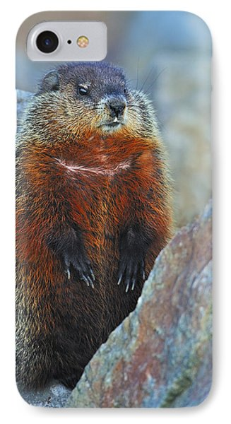 Woodchuck IPhone Case by Tony Beck