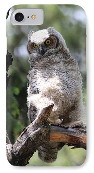 Young Owl Phone Case by Shane Bechler