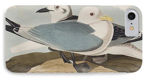 Kittiwake Gull IPhone Case by John James Audubon