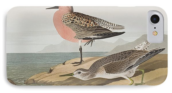 Red-breasted Sandpiper  IPhone Case by John James Audubon