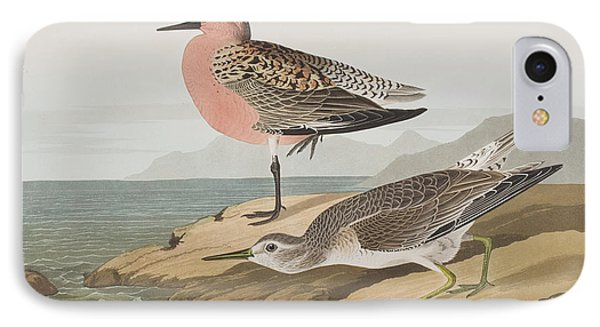 Red-breasted Sandpiper  IPhone 7 Case by John James Audubon