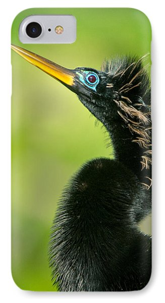 Anhinga Anhinga Anhinga, Tortuguero IPhone Case by Panoramic Images