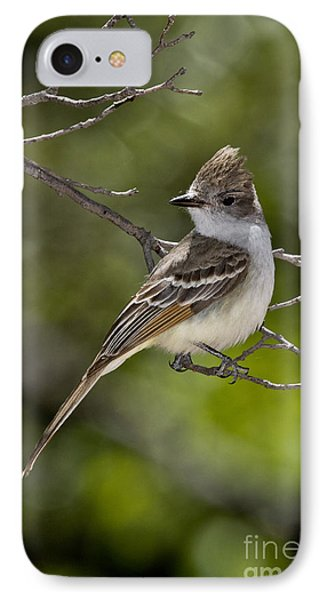 Ash-throated Flycatcher IPhone Case by Anthony Mercieca