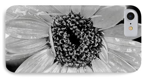 Black And White Gerbera Daisy Phone Case by Amy Fose
