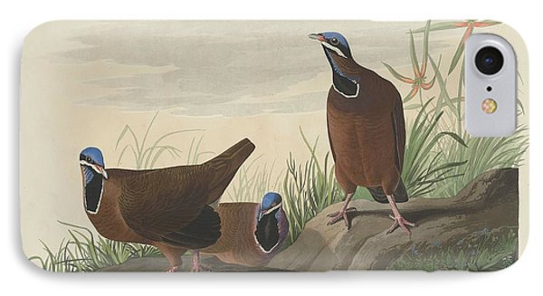 Blue-headed Pigeon IPhone 7 Case by John James Audubon