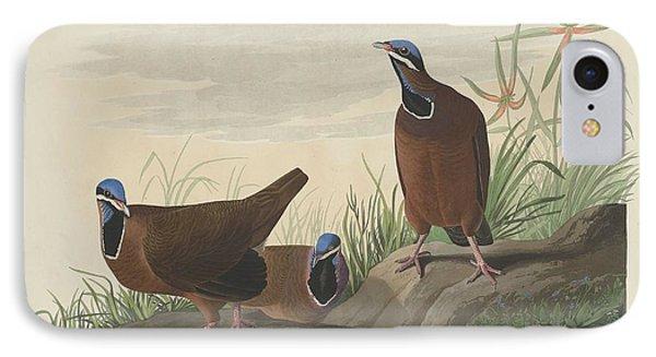 Blue-headed Pigeon IPhone Case by John James Audubon