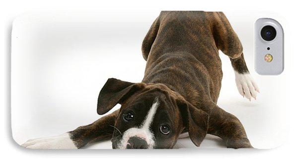 Brindle Boxer Pup IPhone Case by Jane Burton