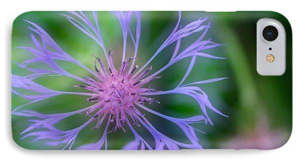 Centaurea Montana IPhone Case by Ludwig Riml