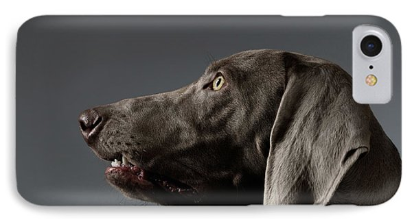Close-up Portrait Weimaraner Dog In Profile View On White Gradient IPhone Case by Sergey Taran