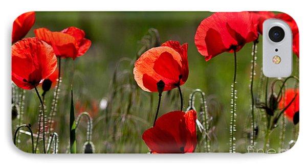 Corn Poppy Flowers IPhone Case by Nailia Schwarz