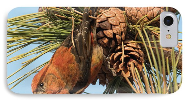 Crossbill IPhone 7 Case by Judd Nathan