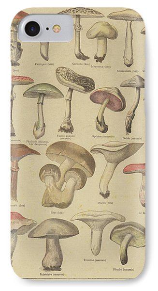 Edible And Poisonous Mushrooms IPhone Case by French School