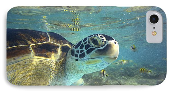 Green Sea Turtle Balicasag Island IPhone Case by Tim Fitzharris