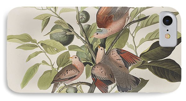 Ground Dove IPhone Case by John James Audubon