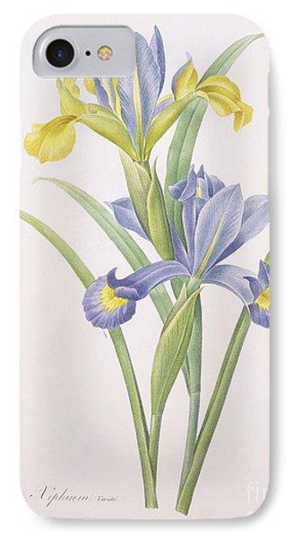 Iris Xiphium IPhone Case by Pierre Joseph Redoute