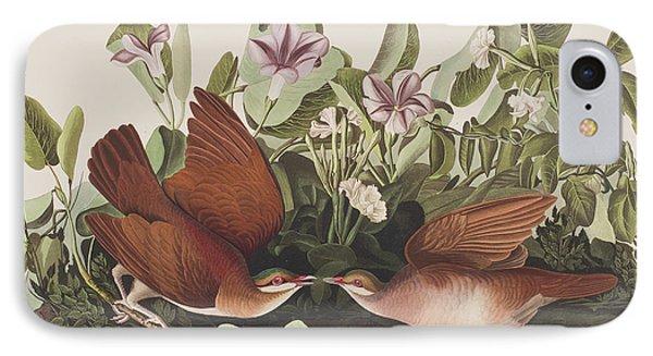 Key West Dove IPhone Case by John James Audubon