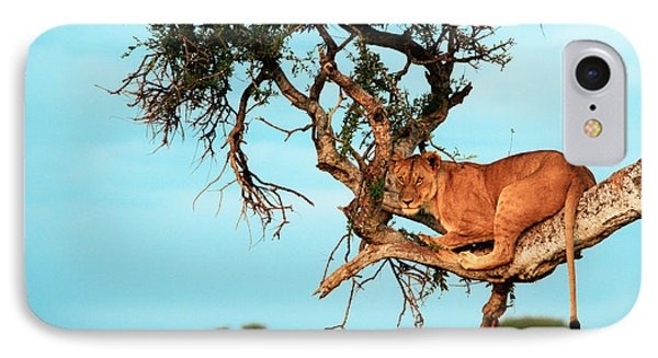 Lioness In Africa IPhone Case by Sebastian Musial