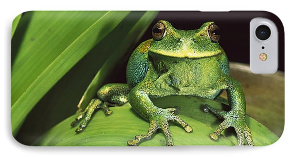 Marsupial Frog Gastrotheca Orophylax Phone Case by Pete Oxford