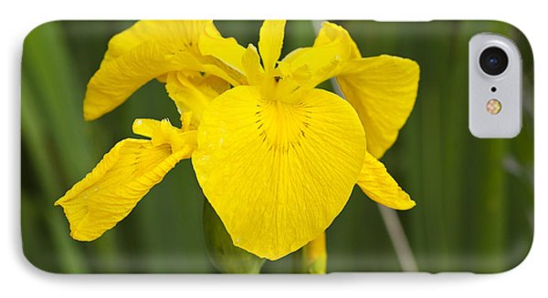 Plant Wild Flower Yellow Flag  Iris Pseudacorus Phone Case by Hugh McKean