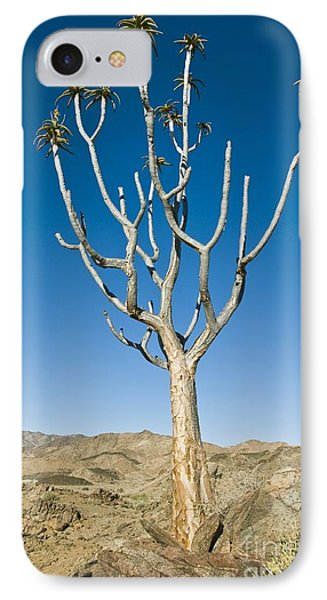 Quiver Tree IPhone Case by Peter Chadwick