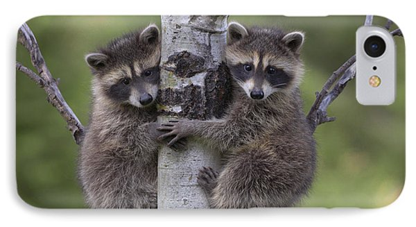 Raccoon Two Babies Climbing Tree North IPhone Case by Tim Fitzharris