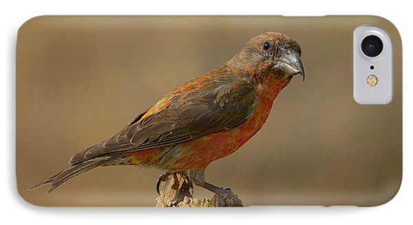Red Crossbill IPhone 7 Case by Doug Herr