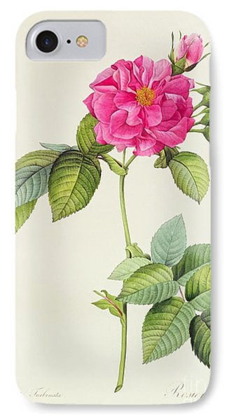 Rosa Turbinata Phone Case by Pierre Joseph Redoute