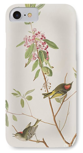 Ruby Crowned Wren IPhone Case by John James Audubon