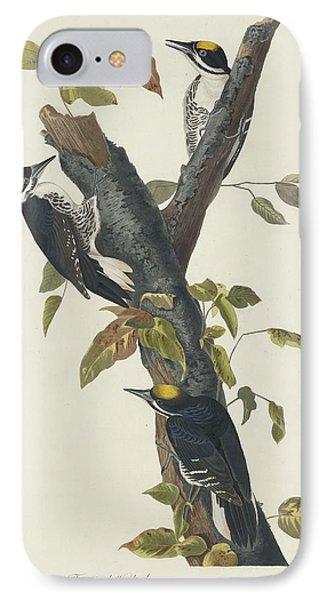 Three-toed Woodpecker IPhone Case by John James Audubon