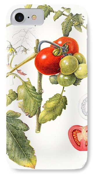 Tomatoes IPhone 7 Case by Margaret Ann Eden