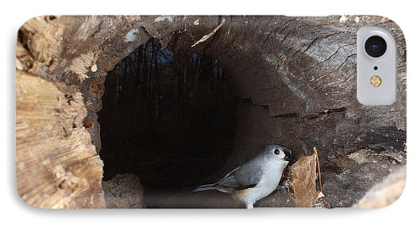 Tufted Titmouse In A Log IPhone Case by Ted Kinsman