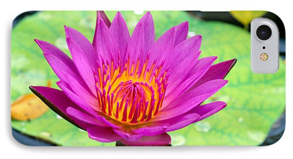 Water Lily Phone Case by Bill Brennan - Printscapes