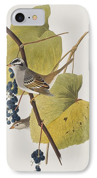 White-crowned Sparrow IPhone 7 Case by John James Audubon