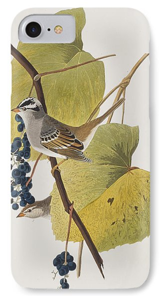White-crowned Sparrow IPhone Case by John James Audubon
