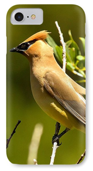 Cedar Waxwing Closeup IPhone Case by Adam Jewell
