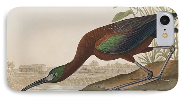 Glossy Ibis IPhone Case by John James Audubon